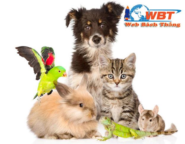thiết kế website bán thú cưng uy tín chất lượng