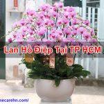 Lan Hồ Điệp Tại TP HCM Mua Bán Chất Lượng Tốt Homecarehn BT