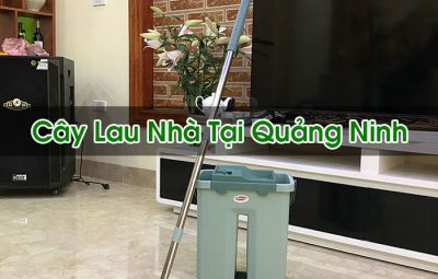 Cây Lau Nhà Tại Quảng Ninh