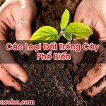 Các Loại Đất Trồng Cây Phổ Biến Đảm Bảo Tốt Nhất – Homecare BT