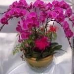 Khám phá ý nghĩa một số loại hoa trưng bày ngày tết