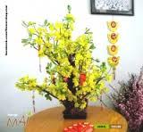 Hoa Mai Vàng truyền thống của người dân miền trong